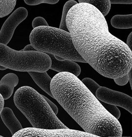 – Usługi usuwania mikroorganizmów – dezynfekcji dla firm i osób prywatnych, usuwanie zapachów, ozonowanie samochodów osobowych                                 i przestrzeni załadunkowej.