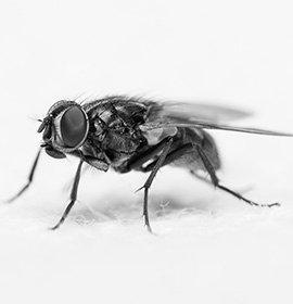 Usługi zwalczania much realizujemyna terenie Białegostoku, Łomży, Ełku, Grajewa czy Suwałk oraz w innych miastach w promieniu                                 200 km od Łomży !